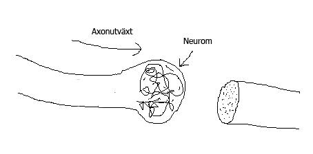 neurom